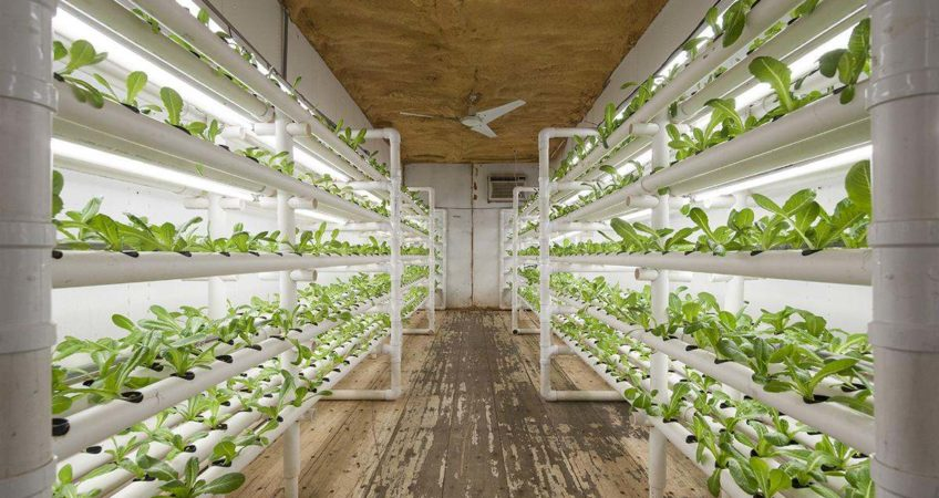 shipping-container-food-growing-848x450